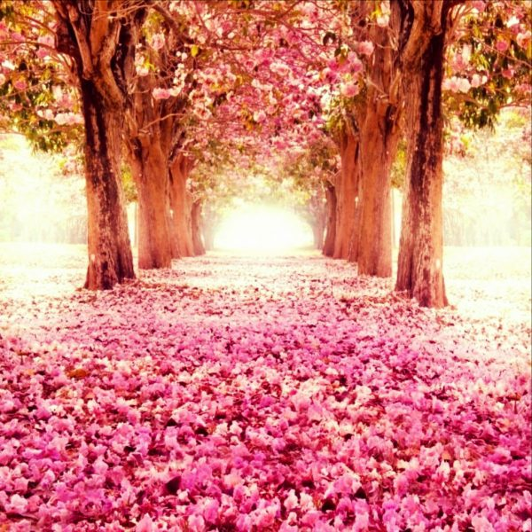 garden-eden_1024x1024