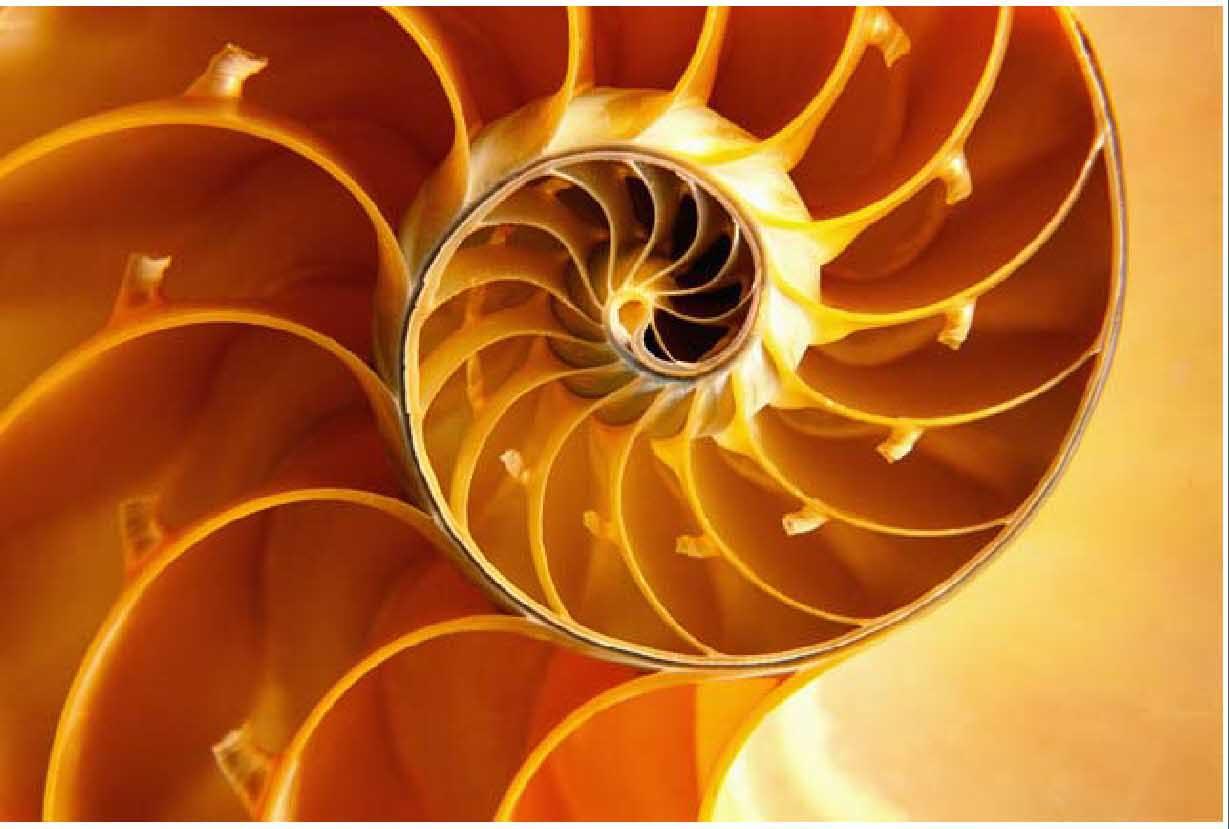 spiral-shell