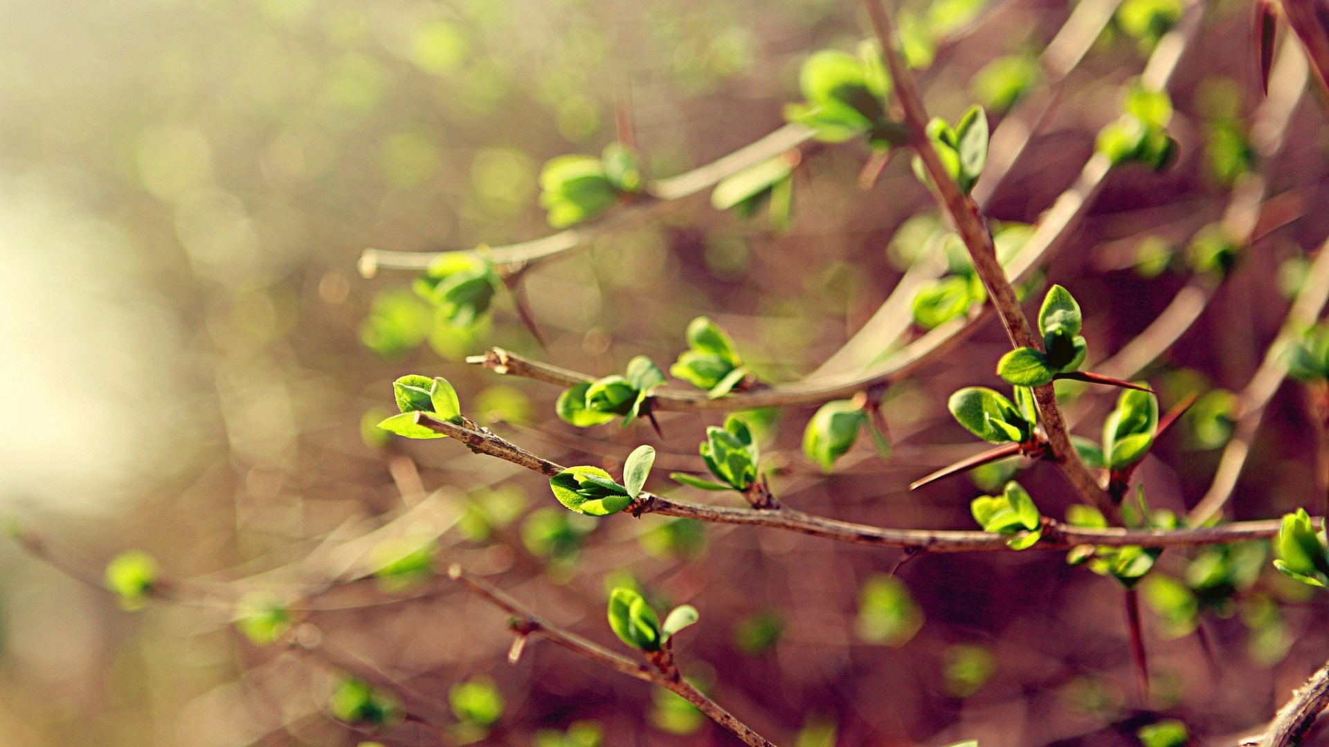 Beautiful-green-branches-tree-in-blossom-spring-season_1920x1080